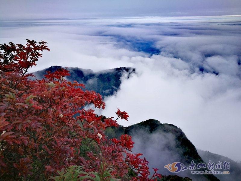 峨眉山的树叶红了!