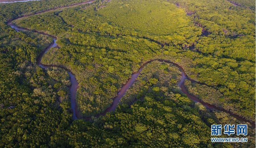 海南将加强红树林保护修复