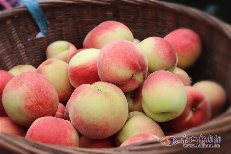 视频|周末去沙湾牛石镇摘桃子